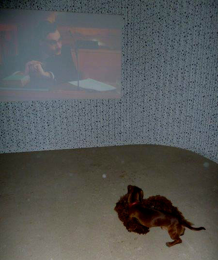 Film screening with rolling dog in front of the wall